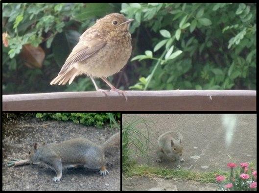 Strangers in my garden