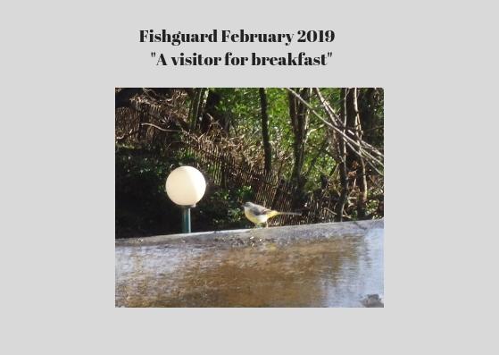 Fishguard bird
